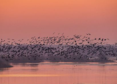 Bird migrations over Biebrza