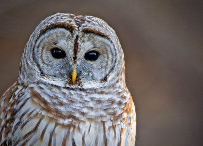 Nationwide Night of the Owls