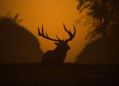 Deer and elk rutting season